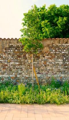 Il Brolo - Borgosatollo